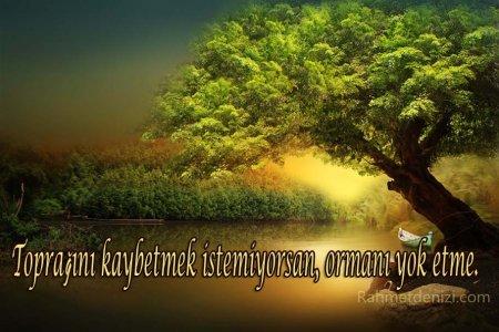 ağaç.